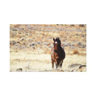 Mustango salvaje entre la impresión de la lona de