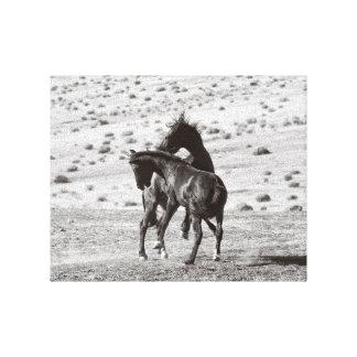 Mustangos salvajes que luchan la impresión de la
