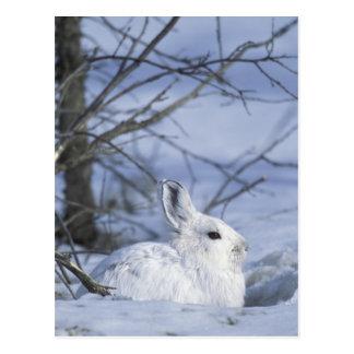 NA, los E.E.U.U., Alaska. Fauna nacional ártica Postal