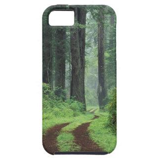 NA, los E.E.U.U., California. Parque de estado de  iPhone 5 Coberturas