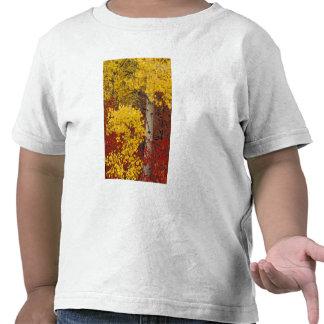 NA, los E.E.U.U., Washington, bosque nacional de Camisetas