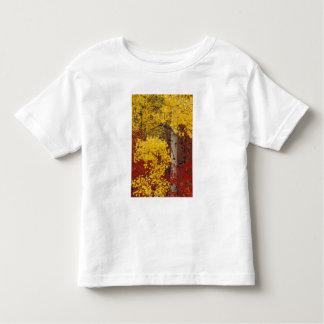 NA, los E.E.U.U., Washington, bosque nacional de Camiseta De Bebé