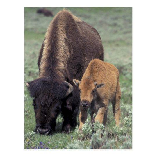 NA, parque nacional de los E.E.U.U., Wyoming, Postal