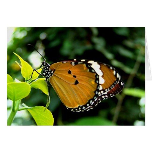 Naranja, mariposa blanco y negro en la hoja tarjetón