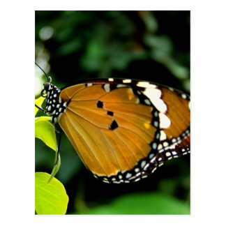 Naranja mariposa blanco y negro en la hoja