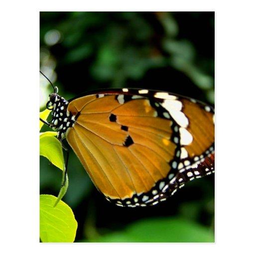 Naranja, mariposa blanco y negro en la hoja postal