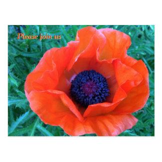 Naranja rojo oriental de la AMAPOLA --- Postal
