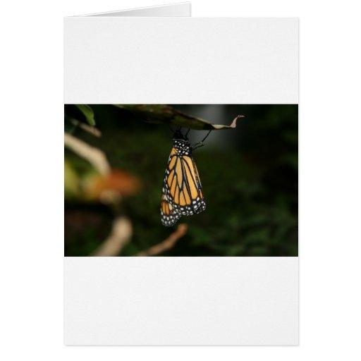 Naranja y negro cons alas, mariposa manchada blanc tarjeta