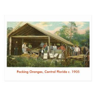 Naranjas, la Florida central C. 1905 Postal
