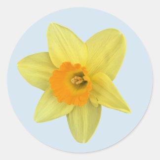 Narciso amarillo de la primavera pegatina redonda