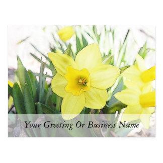 Narciso amarillo soleado tarjetas postales