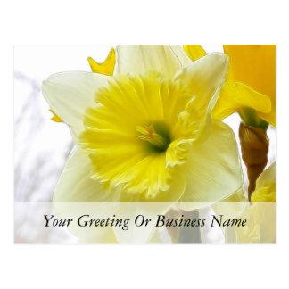 Narciso blanco y amarillo postal