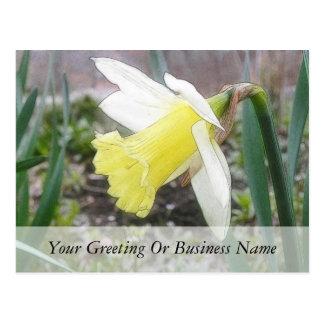 Narciso del jardín en primavera temprana postales