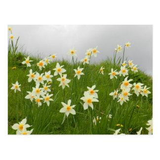 Narciso en los jardines del castillo del birr - Ir Postal