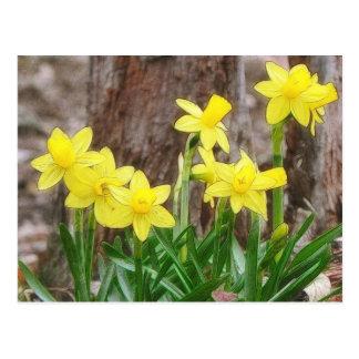 Narcisos amarillos brillantes postales