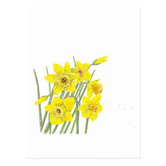 Narcisos bonitos tarjeta postal