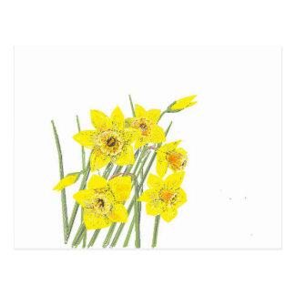 Narcisos bonitos tarjetas postales