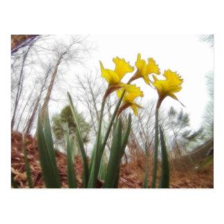 Narcisos del bosque postal