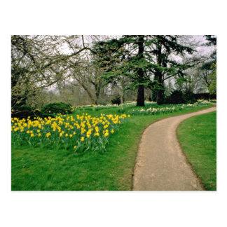 Narcisos en las flores extensas de los jardines de tarjetas postales
