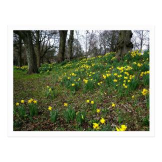 Narcisos Jardines de Sophia Cardiff País de Gal Postales
