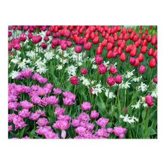 Narcisos y postal coloridos de la impresión de los