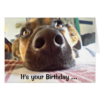 NARIZ del feliz cumpleaños I apenas él perro lindo Tarjeta De Felicitación