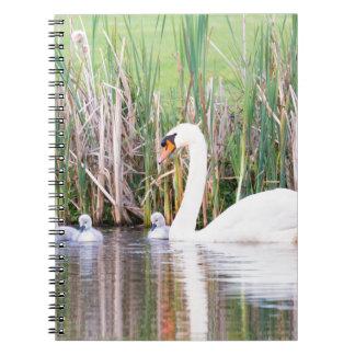 Natación blanca del cisne de la madre con los cuaderno