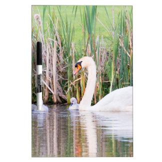 Natación blanca del cisne de la madre con los pizarra blanca