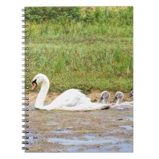 Natación blanca del cisne de la madre conforme a cuaderno