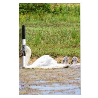 Natación blanca del cisne de la madre conforme a pizarra blanca