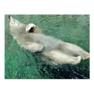 Natación del oso polar en su postal trasera