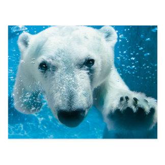 Natación del oso polar postal
