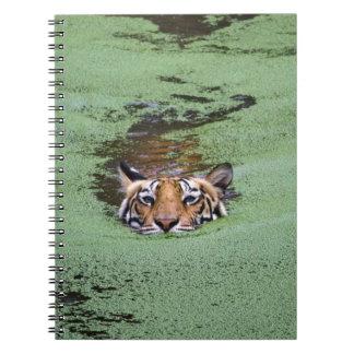 Natación del tigre de Bengala Cuaderno