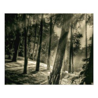 Naturaleza blanco y negro fresca de la sol del folleto 11,4 x 14,2 cm