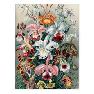 Naturaleza hermosa - orquídeas postal