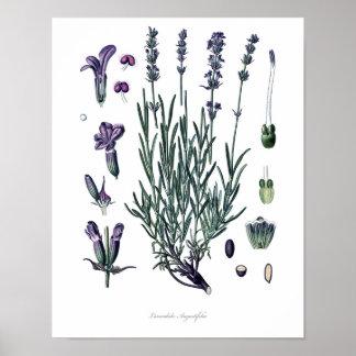 Naturaleza, impresión botánica, arte de la flor de