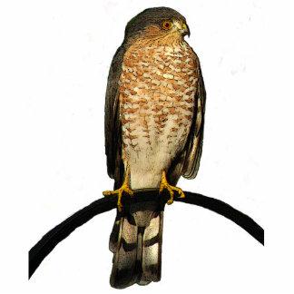 Navidad del halcón que cuelga el acrílico esculturas fotográficas