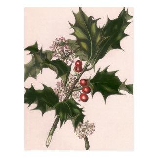 Navidad del vintage, planta del acebo con las postal