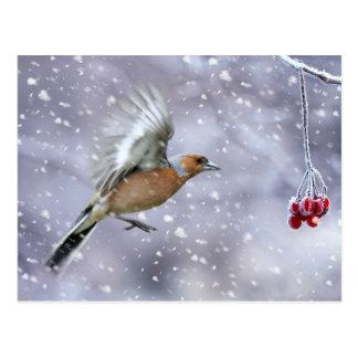 navidad postal, postal del chaffinch del invierno