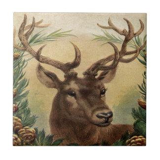 Navidad rústico de la naturaleza del macho del azulejo