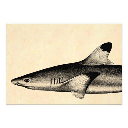 Negro del ejemplo del tiburón del filón del vintag anuncios personalizados