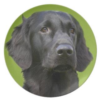 Negro revestido plano del perro del perro plato de cena