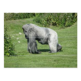 Nico - el gorila postal