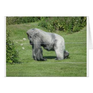 Nico - el gorila tarjeta de felicitación
