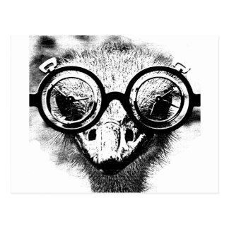 Nicolaus la avestruz en gráfico negro y blanco postal