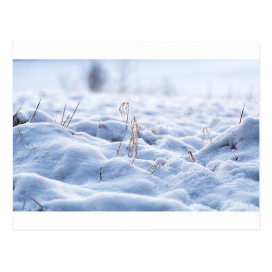 Nieve en un prado en macro del invierno postal
