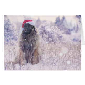 nieve púrpura Leonberger Tarjeta Pequeña