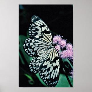 Ninfa del árbol, flores de Malasia Poster