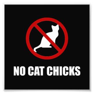 Ningunos polluelos del gato foto