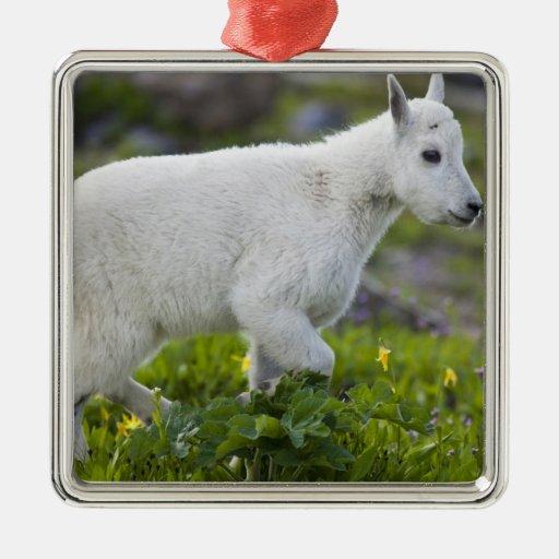 Niño de la cabra de montaña en el paso de Logan en Adornos